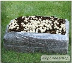 Готовый блок для выращивания Шампиньонов !