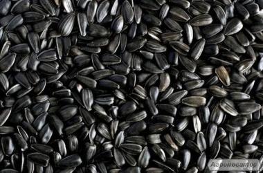 Продам каліброване насіння соняшнику 3, 8, Херсонська обл