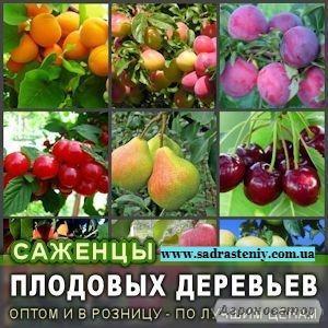 Продажа плодовых деревьев и кустарников элитных сортов