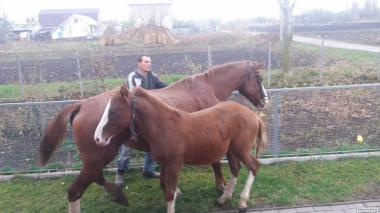 Продам Лошадь 8 месяцев