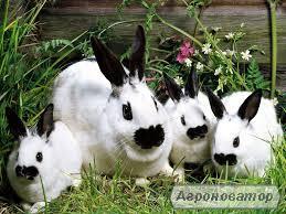 Комбикорм гранулированный для кроликов