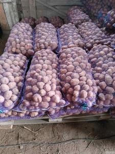 Продам товарный и семенной картофель отличного качества https://agro-u