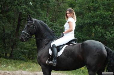 Жеребая кобила Фризької породи 6 років