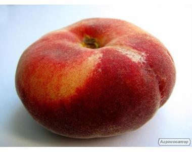 Саджанці інжирового сорти персика Світ Кап (плоский), від виробника