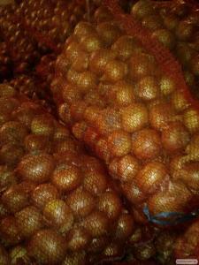 Лук сорт Медуза