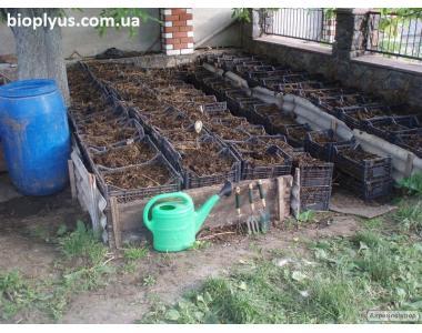 Продаж маточного поголів'я технологічних черв'яків для біогумусу і для