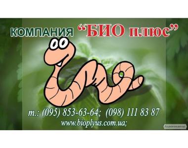 Продаж маточного поголів'я технологічних черв'яків для біогумусу