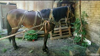 Продам хорошу витривалу кінь(дві) однієї 1.5 року другий - 3,5