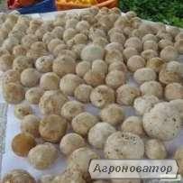 настоянка гриба ВЕСЕЛКА, гриб ВЕСЕЛКА,березовий гриб ЧАГА