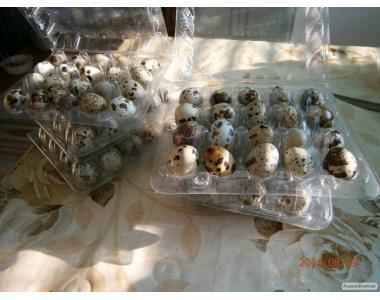 Упаковка для перепелиные яйца