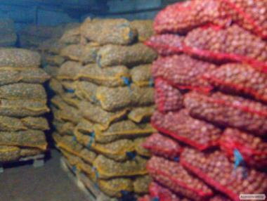 Продам цілий грецький горіх на експорт на постійній основі.