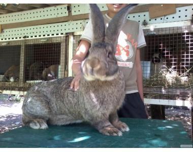 Кролики разных пород и разного возраста