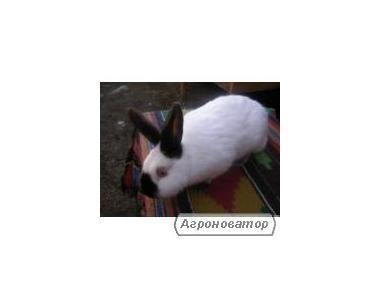 Кролики різних порід та різного віку