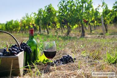 Продам Закарпатське домашнє червоне та біле вино 100% натуральне