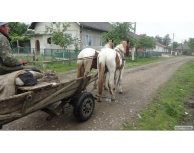 пеги лошади