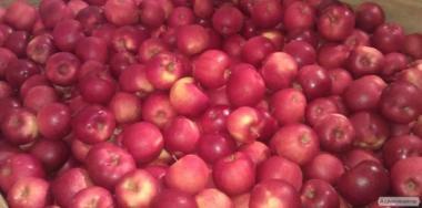 Продам яблоко из холодильника