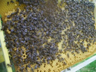 Бджолопакети під замовлення