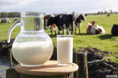 Продам фермерское молоко
