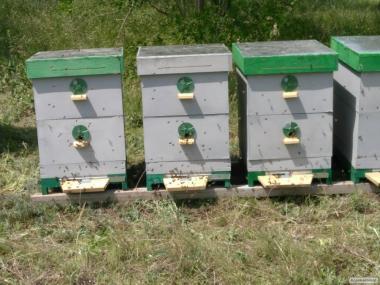 Продам Пчелосемьи с ульями
