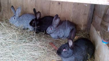 Продам кроликов различных пород.