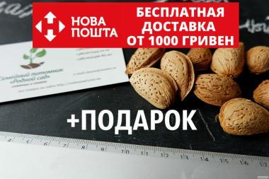 Миндаль сладкий семена (10шт) (семя миндаля для саженцев)семечка