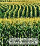 Насіння кукурудзи: НС 2014 (Нові Сад, Сербія)