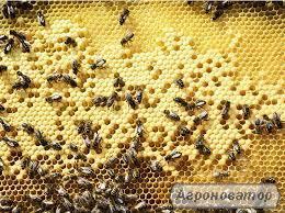 Продам пчелосемьи со своей пасеки
