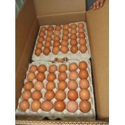 Продам яйцо куриное. Продам яйцо куриное на экспорт, коричневое.