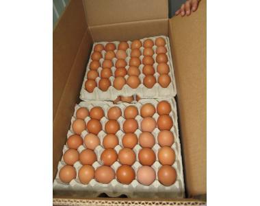 Продам яйце куряче. Продам яйце куряче на експорт, коричневе.
