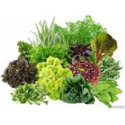 Продаємо свіжі трави, зелень, салати високої якості оптом
