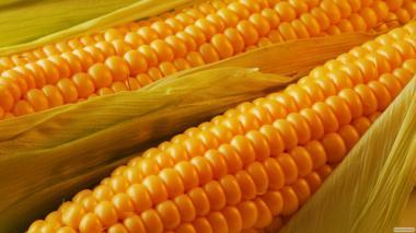 Кукурудза дробленная
