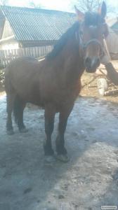 продам коней