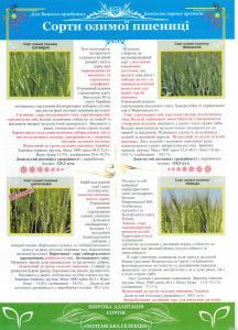 Пшеница озимая