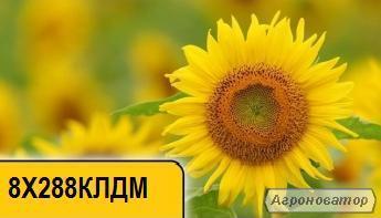 Соняшник 8Х288КЛДМ
