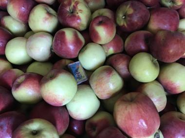 Яблоки домашние