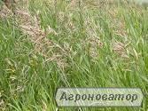 Багаття та інші кормові трави від 9грн для сільгосптварин