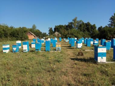 Мед різнотрав'я 1т 50грн/кг 150кг. липи 65грн/кг Харків