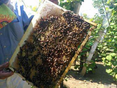 Срочно! Закарпатье. Продам пчелопакеты, Карпатка. Цена договорная.