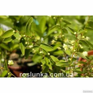 ВНИМАНИЕ! растения по 20 грн! Осенняя Распродажа