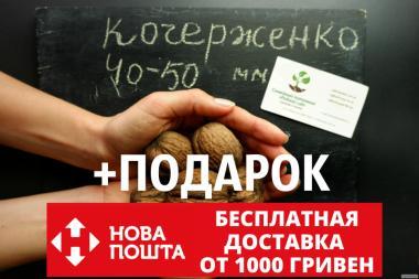 Орех Кочерженко калибр 40-50 мм семена 10 шт грецкий для саженцев