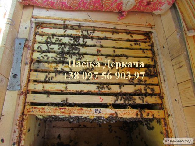 Продам бджолосім'ї карпатських бджіл доставка по Україні