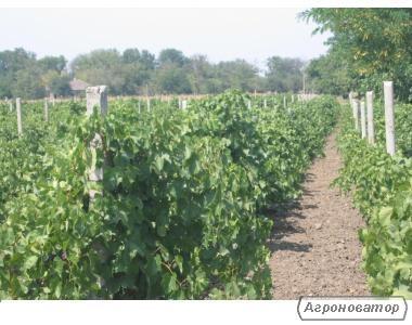 Натуральне еко-вино (сухе червоне,сухе біле,напівсолодке і десерт)