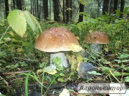 Заморожені гриби: білий гриб (є і цілий кубик)