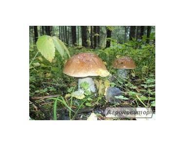 Замороженные грибы: белый гриб (есть целый и кубик)