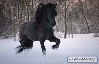 Є Багато коней великий вибір