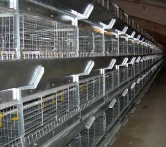 Клеточное оборудования для выращивания ремонтного молодняка кур-несушек