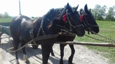 Продам пару коней