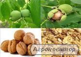 Продам саженцы грецкого ореха (годичка)в количестце 500 шт
