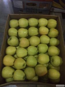 Продаж яблук крупним оптом