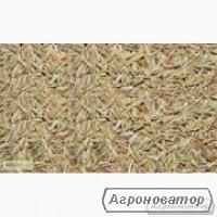 Семена райграса оптом